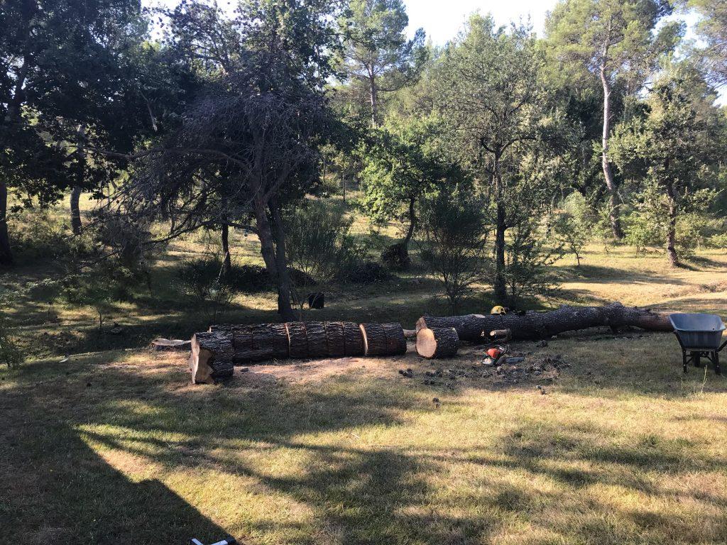 abattage d'arbre en vue d'établir une construction